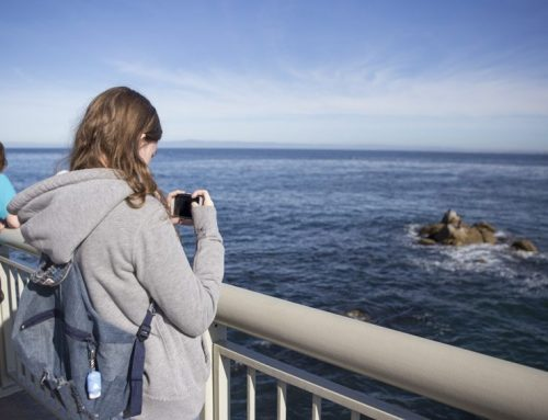 PROMO: Zoology class travels to Monterey Bay Aquarium, Nov. 21