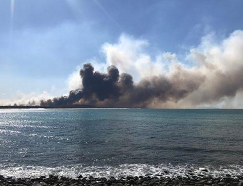 Australia residents suffer amidst bushfire season, native wildlife perishes